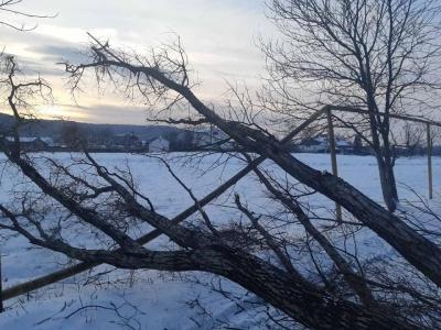 На Буковині невідомі через спилювання дерева залишили без газу 125 домівок