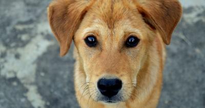 Бив і душив ошийником: поліція перевіряє факт знущання чернівчанина над собакою