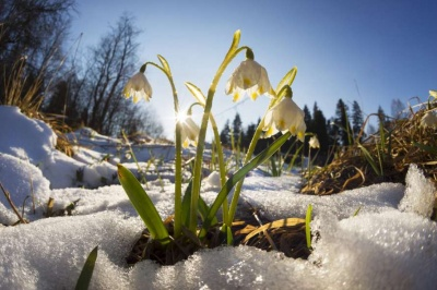 Погода на Буковині 4 березня