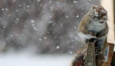 На Буковину насувається дощ зі снігом: синоптики оновили прогноз