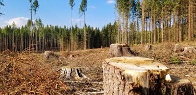Думав, що незаконно рубають дерева, а виявилося – то лісник: поліція Буковини провела розслідування