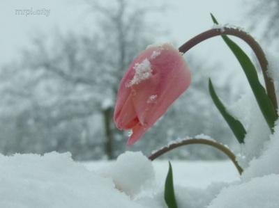 Погода на Буковині 9 березня