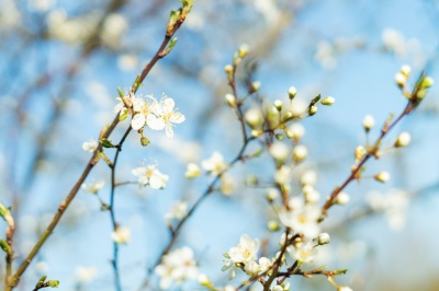Синоптик розповів, якою буде погода на Великдень в Україні