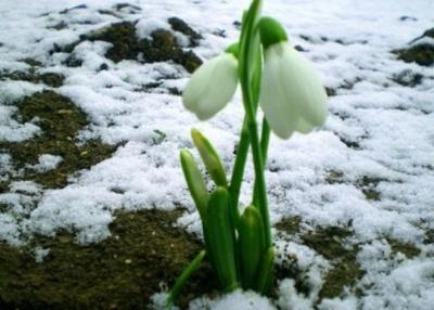 Синоптики розповіли, яку погоду очікувати у березні