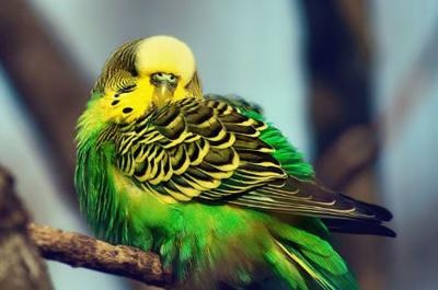 Анекдот дня: про папугу