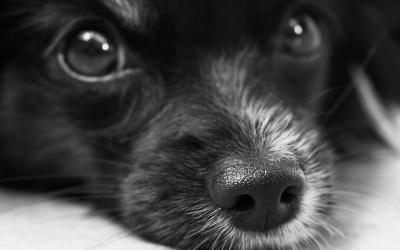 За знущання над тваринами - примусове лікування: за рік на Буковині відкрили 8 кримінальних справ