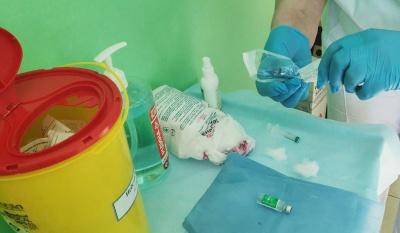 Вакцинація на Буковині: кого з медиків та чиновників щепили сьогодні - фото