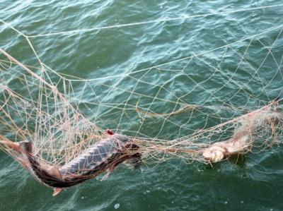 На Буковині засудили трьох браконьєрів, які незаконно виловлювали рибу