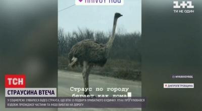 Вулицями Кривого Рогу блукав страус