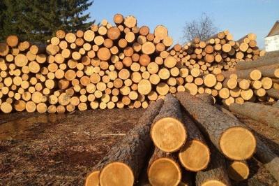 Україна знову дозволить вивозити ліс-кругляк у ЄС, але за однієї умови
