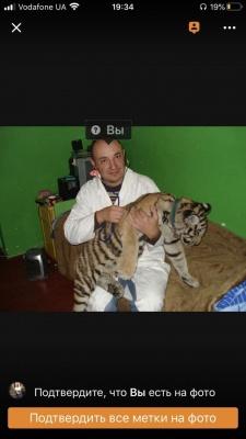 «Промивав шлунок левові»: ветеринар із Чернівців про складні операції - фото