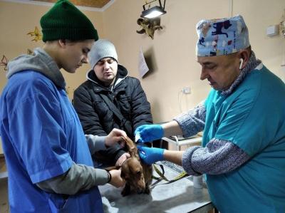 «Промывал желудок львиные»: ветеринар из Черновцов о сложных операции - фото