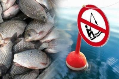 На Буковині заборонили ловити рибу: суми штрафів
