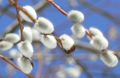 Синоптики розповіли, чим здивує погода на початку квітня