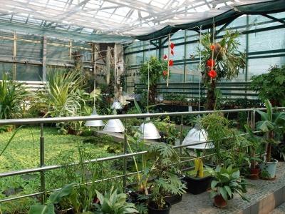 Невідома Буковина: історія створення Ботанічного саду ЧНУ