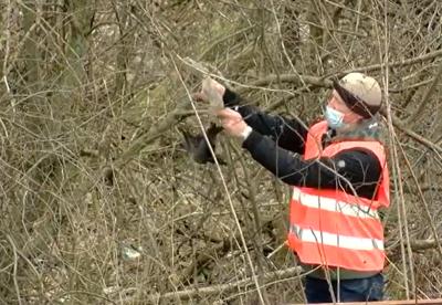 Телеоператор з Чернівців під час зйомок врятував пташку: зворушливе відео