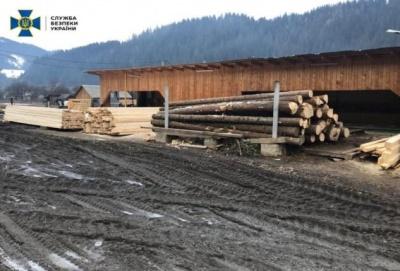Щомісяця вивозили до 10 вантажівок: на Буковині викрито масштабне розкрадання деревини смереки