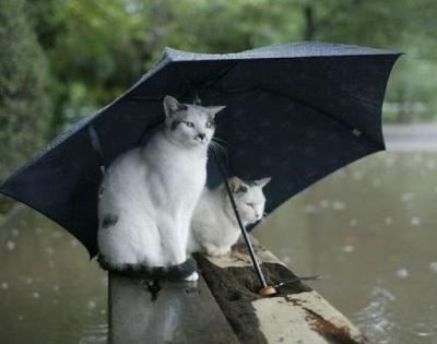 На Буковині прийдуть дощі: прогноз погоди на 3 квітня