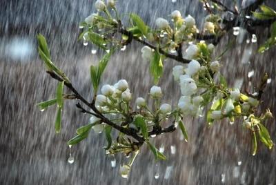 Сніг та мокрий сніг: якою буде погода на Буковині 4 квітня