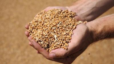В Україні прогнозують зростання врожаю зернових у 2021 році