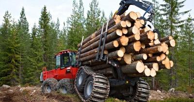 За рік лісгоспи Закарпаття продали через прозорі аукціони деревини на майже 400 млн грн