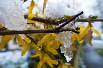 На Буковину насувається похолодання і мокрий сніг