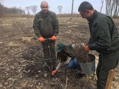 На Буковині розпочалася лісопосівна кампанія – фото