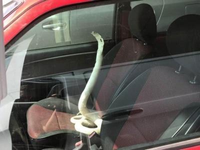 Змія-антизлам та інші дивовижні учасники дорожнього руху: 13 кумедних фото