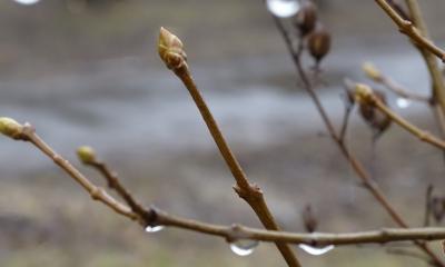 На заході України - дощ з мокрим снігом: в Україну сунуть два циклони