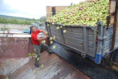 На Буковині відбулось рейдерське захоплення великої компанії з вирощування яблук – нардеп