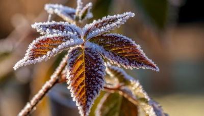 Синоптики попередили про заморозки в більшості областей України