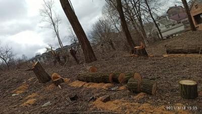 В спальному районі Чернівців масово вирубали дерева
