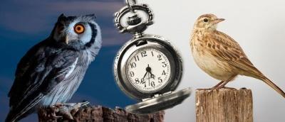 """""""Сови"""" і """"жайворонки"""": як перебудувати свій пізній підйом на ранній"""