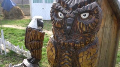 «Повертаю деревам друге життя»: буковинець вирізьблює зі старих стовбурів казкових звірів і птахів - відео