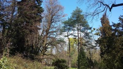 Магнолії, тюльпани, гіацинти: у Ботанічному саду ЧНУ розцвіла велика кількість рослин – фото