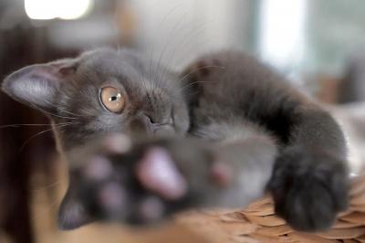 Котик розсмішив не лише своїх господарів, але й Мережу, провальною спробою вкрасти ковбасу