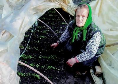 «У селі всі знають, що у мене гарна розсада»: буковинка розповіла секрети гарних урожаїв