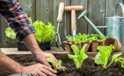 Посівний календар на травень 2021: що і коли можна сіяти і садити