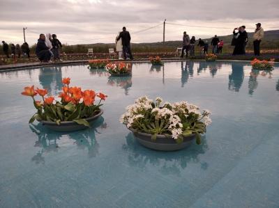 Тюльпанове поле на Буковині та порятунок хлопчика. Головні новини минулої доби