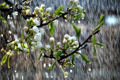 На Буковині ще прогнозують заморозки: коли їх очікувати