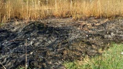 Пожежа у селі на Буковині: знову горіла суха трава