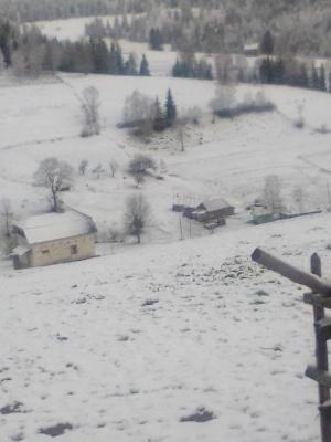 Прикарпаття посеред травня вкрило снігом: у мережі діляться світлинами