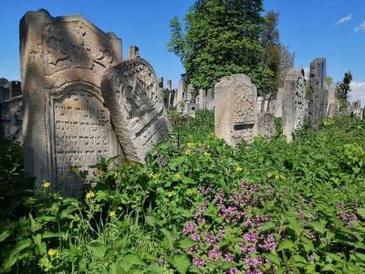 Дружину Макаревича обурив стан єврейського кладовища у Чернівцях – фото