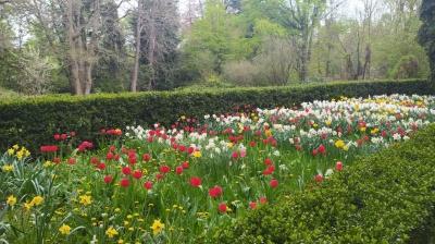 У Чернівцях відновили екскурсії ботанічним садом: що можна побачити - фото