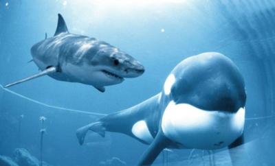 Анекдот дня: про двох акул