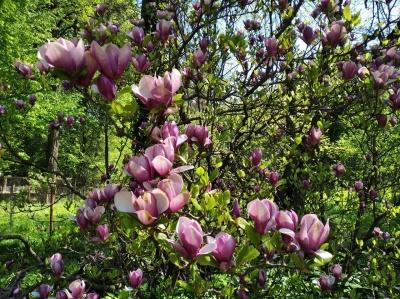 Ботанічний сад у Чернівцях відчинив двері для відвідувачів: як потрапити - фото