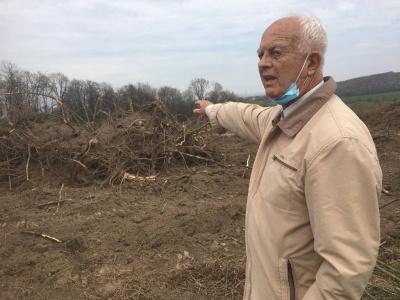 Зрубали лісові насадження: на Буковині фермер самовільно звільнив від дерев понад 5 га землі