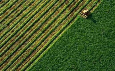 Українців закликали не продавати землю одразу після запуску ринку землі: в уряді пояснили причину