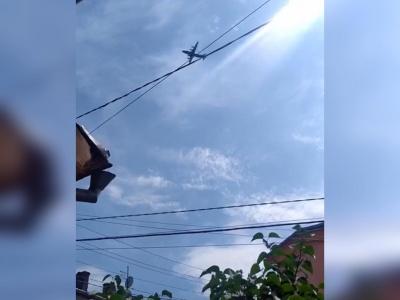 «Нічого не розпилюють»: в аеропорту пояснили, чому над Чернівцями вранці кружляв літак – відео