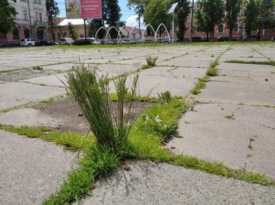 Площі Чернівців поросли травою – фото